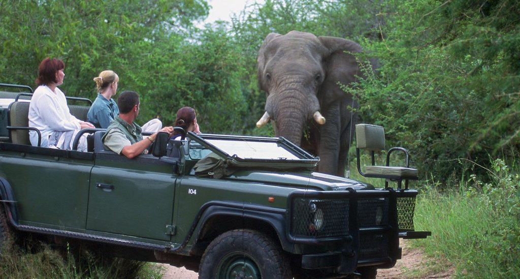 The Kanyezi Safari Advantage At Kruger National Park